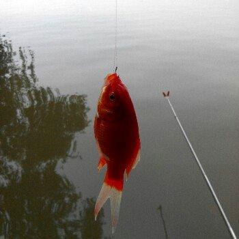 游动的小鱼