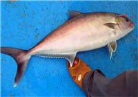 《海钓视频》 美女铁板海钓钓到红甘鱼