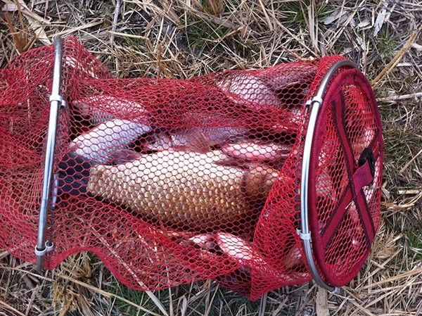 冬季野河釣魚