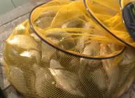 《垂钓对象鱼视频》武汉天元冬季黑坑钓鲫鱼技巧分析