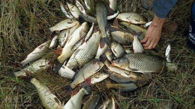 云龍水庫釣魚