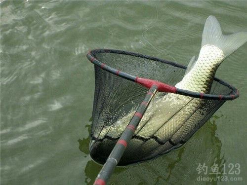 钓草鱼饵料配方