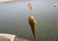 海水釣技篇:手把手帶你認識浮游磯釣