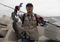 荷包岛根钓黑鲷