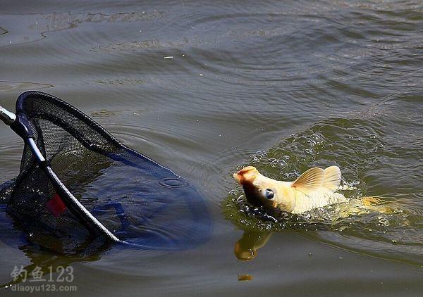 春季坑塘釣魚