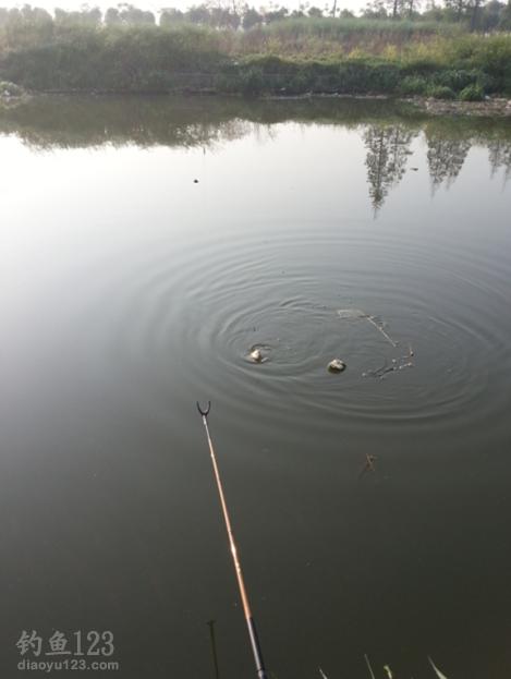 釣鯽魚雙飛