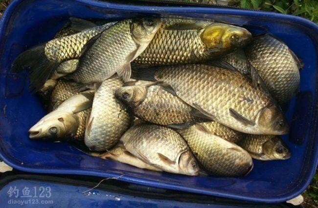 我当天的渔获大多是拖钓上来的。