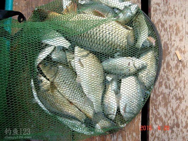 云竹湖的鱼获
