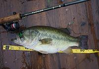 微风细雨战水库,路亚十余斤重大鲈鱼