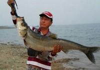 鸭河水库路亚之行20斤大翘嘴出水记