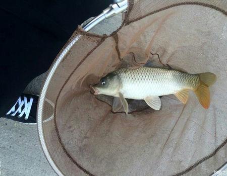 人生第一条大鲤鱼 钓鱼之家饵料钓鲫鱼