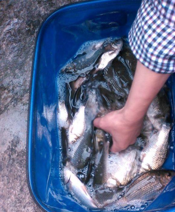 这是我的渔获,六十多条