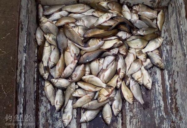 渔获,大多清一色小鲫