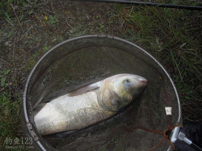 鱼从鲶鱼、青鱼、鲤鱼、鲫鱼、鳊鱼、鲢鳙