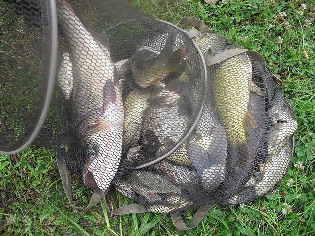 最后的渔获。