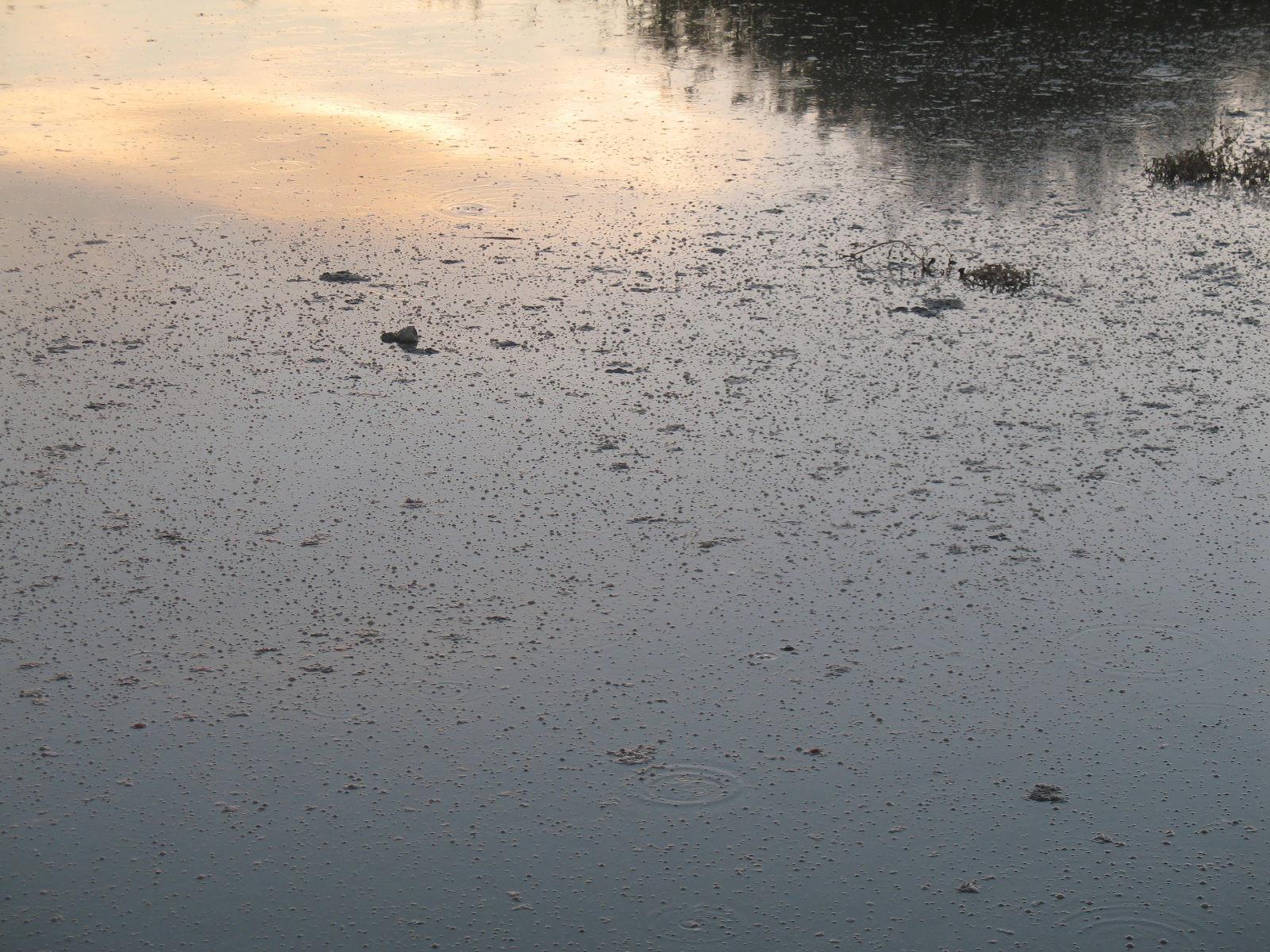 蘑菇湖水库