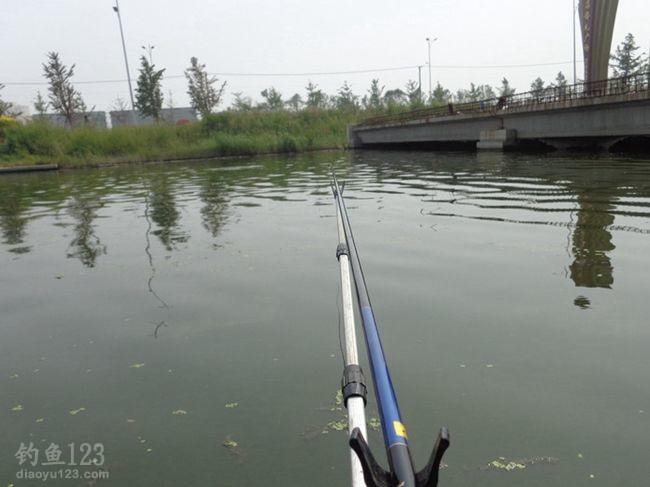 钓点就选在桥侧,这个附近经常出现大鲫鱼