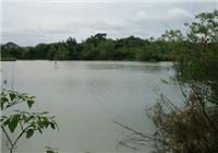 秋天野河使用嫩草做饵垂钓大草鱼大鲮鱼