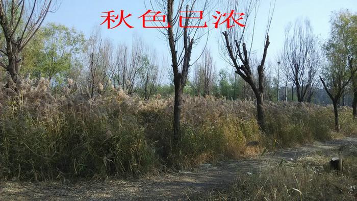 【原创】2015渔乐小记(二十四)----阿魏
