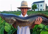 老钓友分享夏季野钓黑鱼的必备技巧