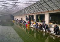 冬季北方温室大棚手竿台钓大青鱼大鲤鱼
