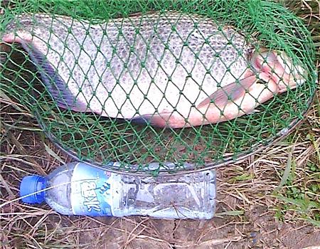 夏季河邊擒獲5斤2兩大鳊魚