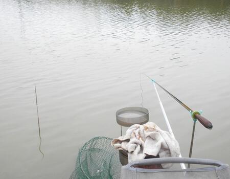 夏季雨天水塘一尾鳊魚小樂樂