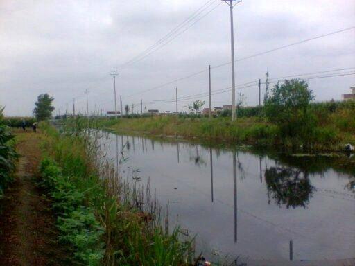 春季阴雨天家边小河钓鳊鱼鲫鱼
