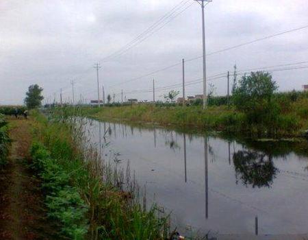 春季陰雨天家邊小河釣鳊魚鯽魚