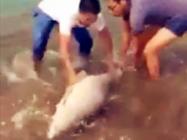 《钓友原创钓鱼视频》 自然水域擒获巨型青鱼