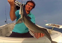 《路亚钓鱼视频》 海上路亚收获奇鱼