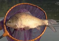 《水库钓鱼视频》钓鱼大师看漂抓口遛鱼视频合辑(4)