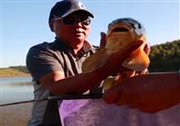 《水库钓鱼视频》钓鱼大师看漂抓口遛鱼视频合辑(3)