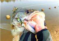 路亚战报——冬季路亚基地软饵钓鳜鱼