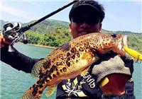 水库路亚鳜鱼的实战经验和技巧(下)