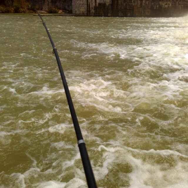 快看那个哈心又在钓鱼了