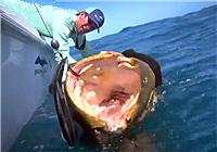 《海钓视频》 男子奇葩姿势钓获巨型龙趸鱼