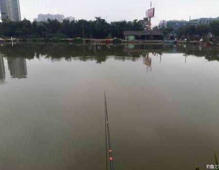 冬季阴雨天中山觅青鱼!