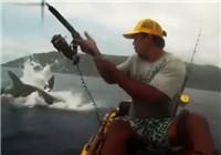 《海钓视频》 海钓遇到鲨鱼突袭夺食