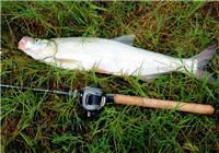 高手分享夏季路亚翘嘴鱼的经验(中)
