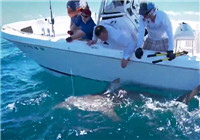 《海钓视频》 队友海钓遭遇鲨鱼抢食