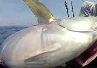 《海钓视频》 男子深海作钓擒获巨物