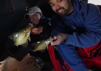 《路亚钓鱼视频》 钓友路亚冰钓收获颇丰