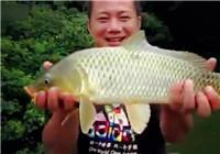 《垂钓对象鱼视频》 自然水域小竿细线野钓大鲤鱼