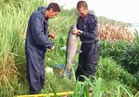 《垂钓对象鱼视频》 夏季草丛岸边钓大青鱼