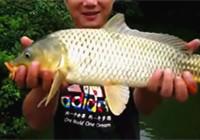 《垂钓对象鱼视频》  男子水库细竿搏获黄金鲤