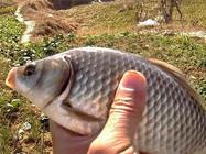 常见鱼类的生活习性和钓法大全(上)