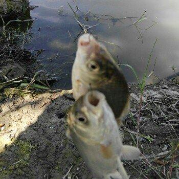小鱼也疯钓