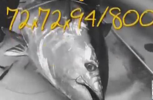 《钓鱼视频》邓尼斯布莱德钓大黑鲔