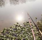 武汉妹子爱钓鱼,野钓收获鲫两条